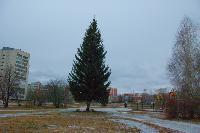 У пруда появилась новогодняя елка