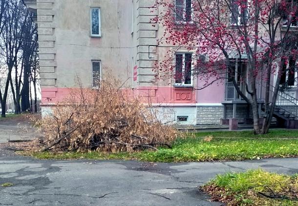 Деревья в сквере не убрали