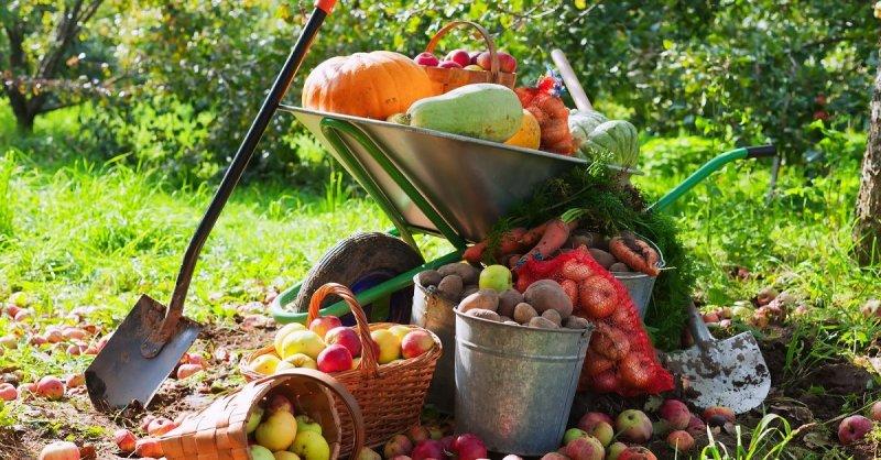 В Челябинской области увеличится финансирование садоводческих товариществ